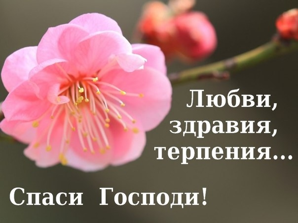 http://www.arhangel.prihod.ru/users/77/577/editor_files/image/Ta7Vt9lQ_5g.jpg